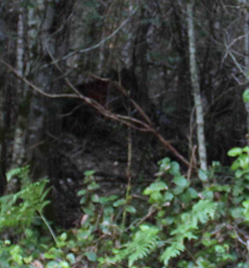 Side of Bluff Creek road - zoomed